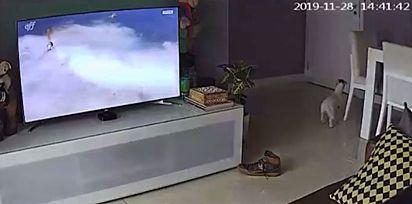 Theo, ao ouvir o dono chegar, rapidamente corre para a porta para recebê-lo.