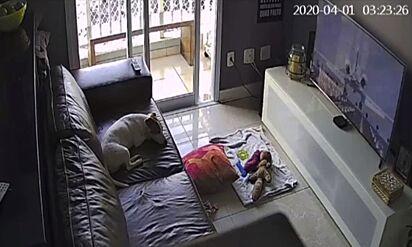 Boa parte do tempo o cãozinho é filmado deitado esperando o seu dono voltar do trabalho.