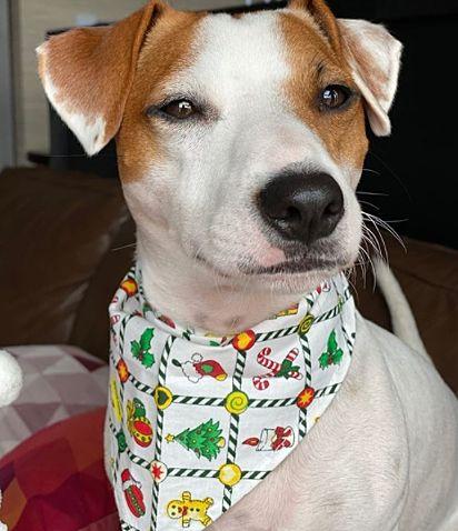 O cãozinho Theo, da raça jack russell, tem emocionado muitos donos de pets com o seu vídeo.