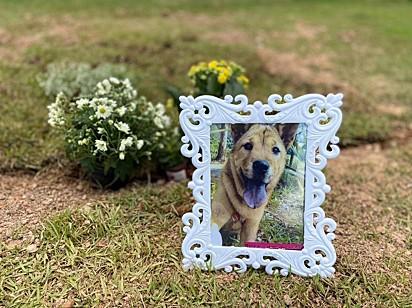 A cadela Ricca tinha apenas sete meses quando foi morta pelo dono.
