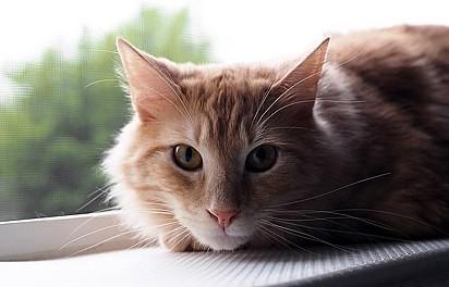 Aaron Brown, 37, adotou o gatinho Tormund, 2, no início do ano passado.