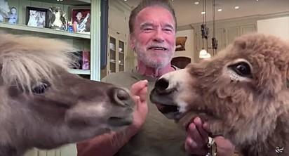 Arnie, Lulu e Whiskey em uma live para o Jimmy Kimmel.