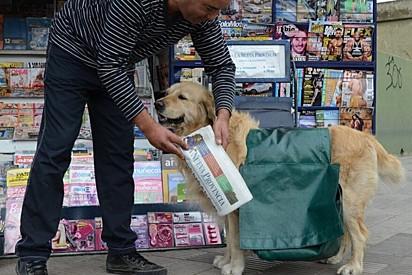 O cachorro da raça golden retriever, Buddy, acompanhava seu dono no dia a dia da banca de jornais.