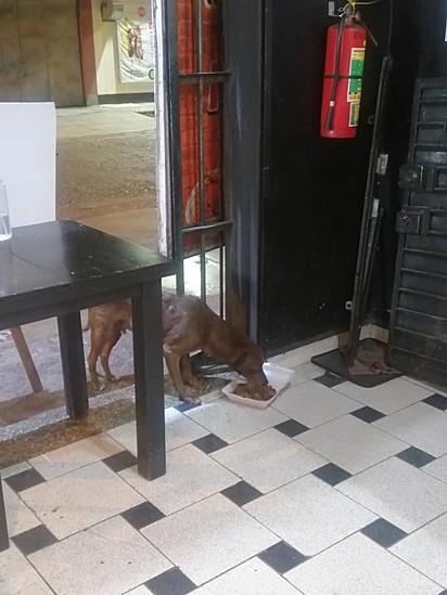 O cachorrinho come o delicioso prato ao fim do expediente do restaurante peruano.