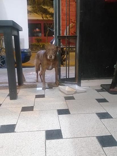 O proprietário precisou postar fotos do animal comendo para negar rumores de que sua atitude era apenas marketing.