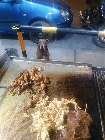 O cachorro espera pacientemente pela sua comida preparada pelo restaurante.