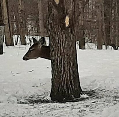 Muitos internautas ficariam curiosos com a imagem do cervo.