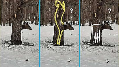 A internet levantou algumas teorias de como o corpo deste cervo está posicionado atrás do tronco.