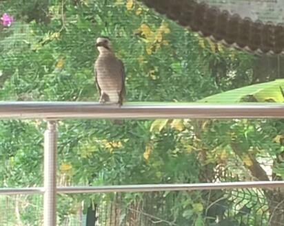 O corvo observava em silêncio a mulher e os gatos.
