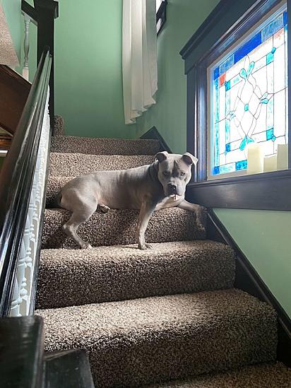 O novo quintal foi totalmente aprovado pela cadelinha.