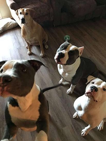 Chantelle Wallace tem quatro cachorros em casa.