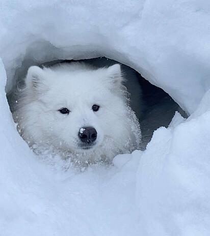A cadela adorou seu novo esconderijo.