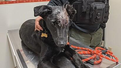 Cão sobrevivente a queimaduras será cão de terapia para crianças em mesma situação.