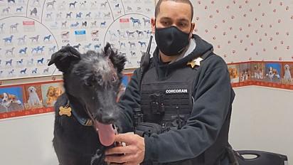 O cachorro Romee passou por 50 procedimentos médicos.
