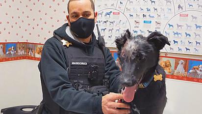 O animal chegou na clínica veterinária aos dois meses de idade com queimaduras severas.
