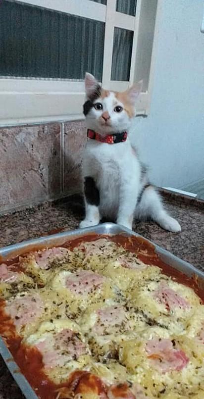 A gata posa orgulhosa para a foto ao lado de sua deliciosa receita de macarrão.