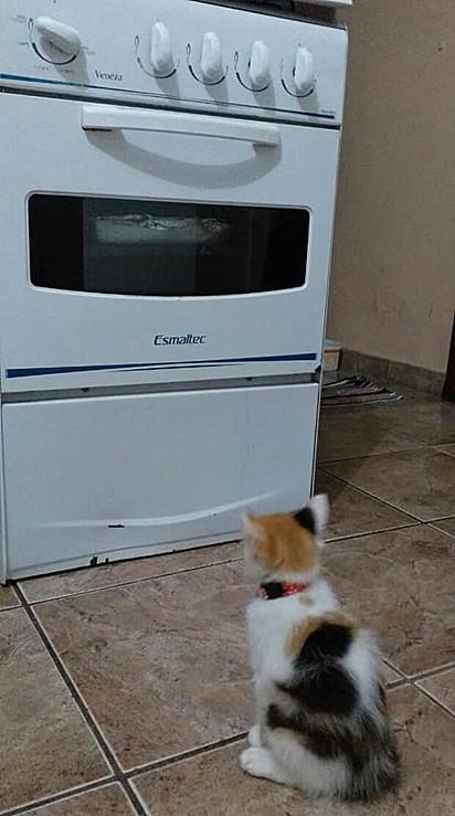 A gatinha fica em frente ao fogão esperando a receita ficar pronto em 30 minutos.
