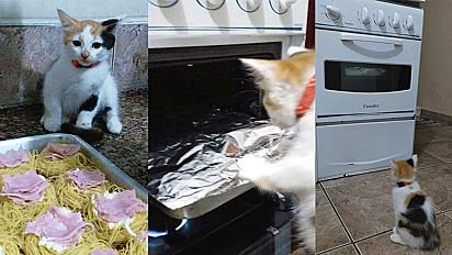 Em um detalhado passo a passo a filhotinha gata explica - de maneira muito fofa e engraçada - como fazer a receita.