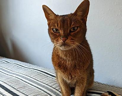 A vizinha contatou um grupo de resgate local para ajudá-la com a gatinha.