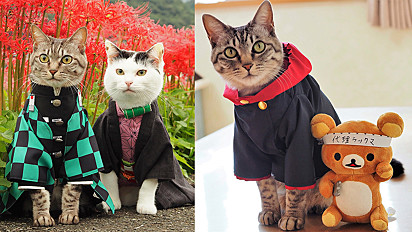 Gatos ganham de japonês as fantasias mais incríveis de anime.