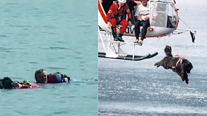 Cães na Itália participam de treinamento para atuarem em praias como cães salva-vidas.