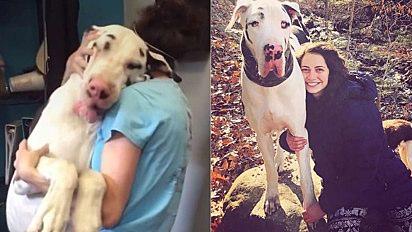 O cachorro Kernel, mesmo sendo enorme, tem a necessidade de estar sempre grudado na sua dona.