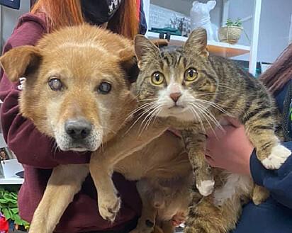 Os amigos Spike, o cachorro cego, e Max, seu gato-guia.