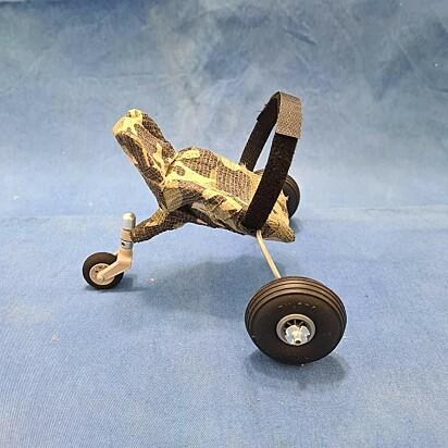A cadeira de rodas para papagaio criada pela veterinária Maria Ângela Panelli