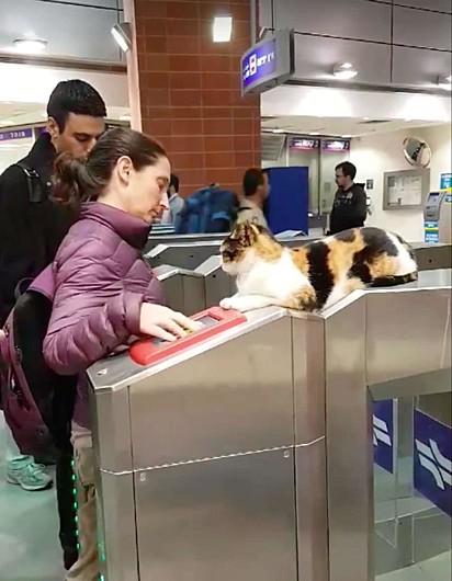 A gatinha, Mitsi, fiscaliza a catraca de metrô em Israel: Isso mesmo humana, passa esse cartão aí.