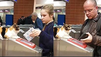 Vídeos da gatinha fiscalizando passageiros de metrô em Israel viralizaram depois de postagem de usuário do terminal.