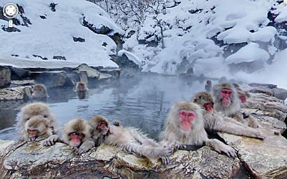 Aquele macaco no fundo parece comigo quando entrei numa sauna com meus tios quando era moleque.