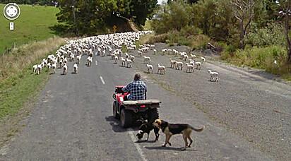 """""""Aí, Rafa, 'cê não acha que *nós* que deveríamos estar pastoreando as ovelhas?"""""""