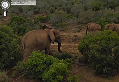"""""""A triste ironia que estes elefantes estavam tentando sair para pegar um rango e o Google Maps os decepcionou."""""""