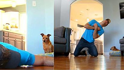 O norte-americano Cory Williams decidiu simular um desmaio na frente da cadela, caindo no chão para ver como ela reagiria.