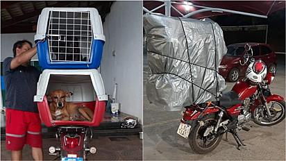 Homem atravessa mais de mil quilômetros de moto com suas cachorrinhas