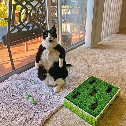 A gatinha Peggy adora ficar sentada em duas patas.
