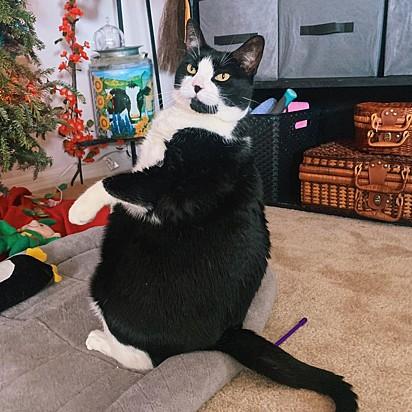 Desde que Peggy foi adotada, ela tinha o estranho hábito de sentar como um pinguim.