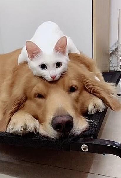 Os dois amigos estão sempre juntos, mesmo quando estão dormindo.