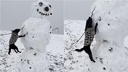 """Cachorrinha da raça Jackapoo não consegue """"desarmar"""" um boneco de neve."""