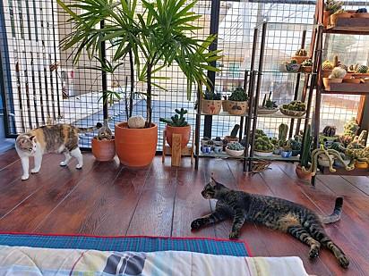 Os gatinhos parecem ter aprovado o novo espaço destinado a eles.