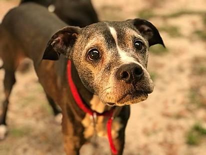 Kenny era um cachorro com 13 anos de vida e com câncer terminal, e ninguém queria adotá-lo.