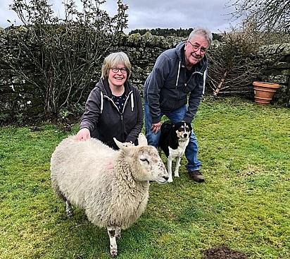 Ronnie e Philippa Ingledew com seus animais de estimação: Mist, a border collie, e Hope, a ovelha.