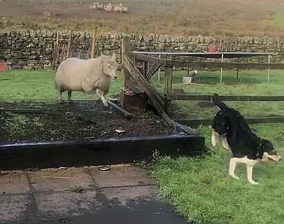 As duas amigas adoram brincar juntas.