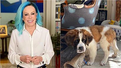 Ana Maria Braga ganha um novo filhote de cachorro, um São Bernardo.