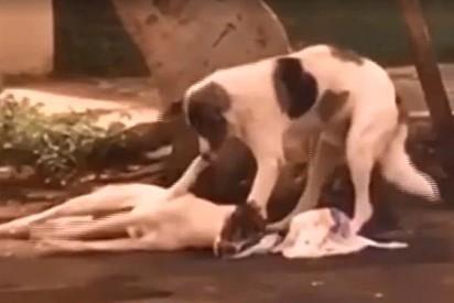 O cãozinho não deixou por nenhum segundo o seu amigo ferido.