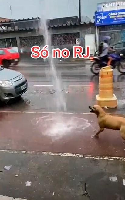O cãozinho se diverte brincando na chuva.