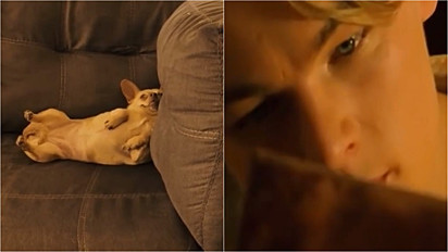 Dono de cadela chihuahua recria a cena do filme Titanic em que Leo DiCaprio pinta a Rose.
