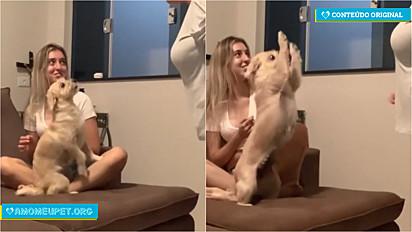 Cachorrinha defende bravamente a sua dona de discussão com a mãe.