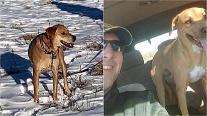 Cão é encontrado milagrosamente em rodovia em que o dono desapareceu.