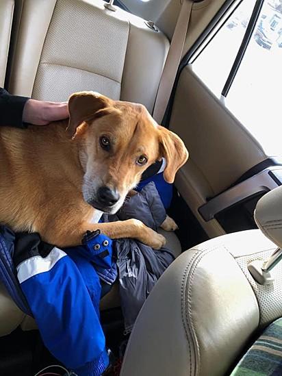O cão foi encontrado sem nenhuma lesão, dando esperanças à família de encontrarem também Josh Hall.